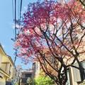 空と花と色と