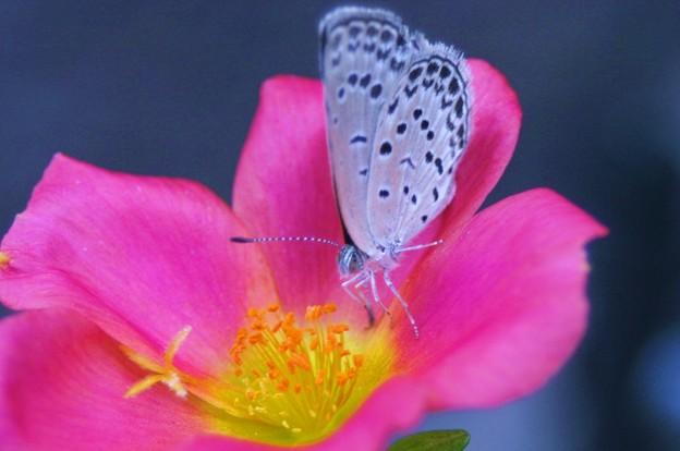 Photos: 花は綺麗に、蝶は可愛く!(^:^/ww