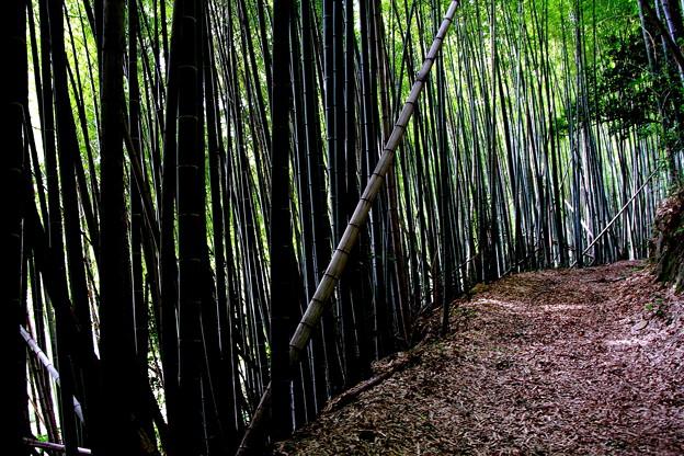 写真: 竹林の道
