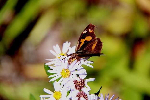 写真: 山野の花に