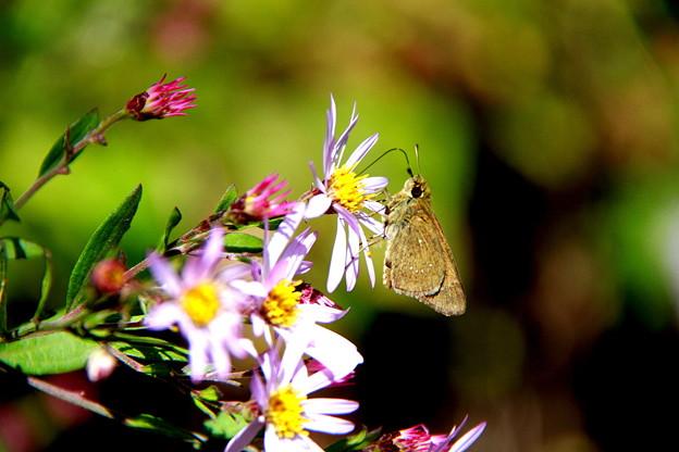 山野の花に