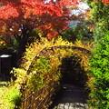 紅葉と萩のトンネル