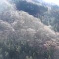 ダケカンバの樹林