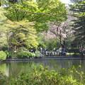 写真: 桜と新緑
