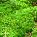 写真: 緑の苔