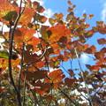 写真: 秋の始まり