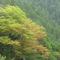 写真: 里の秋