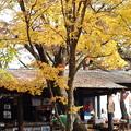 Photos: 城山茶屋