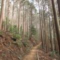 Photos: 平坦な山道