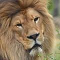 ライオンのソラくん01