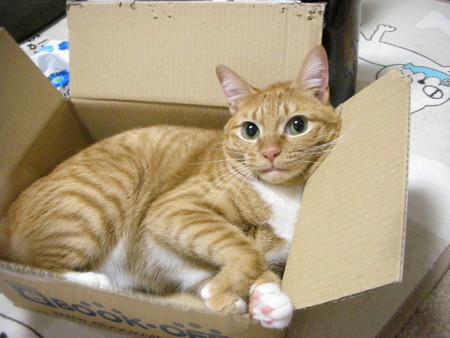 箱があったら入りたい