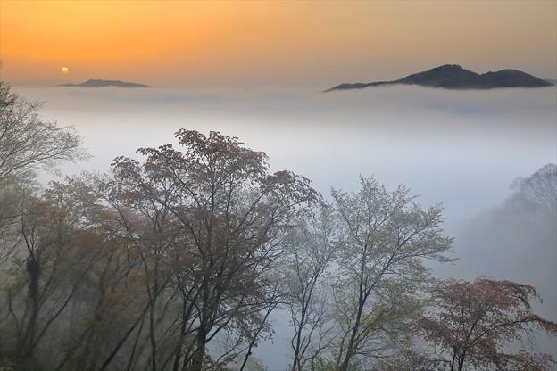 写真: 春の雲海