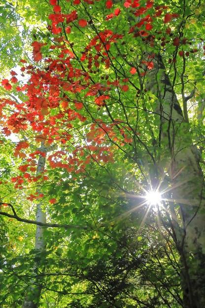 秋が来た♪