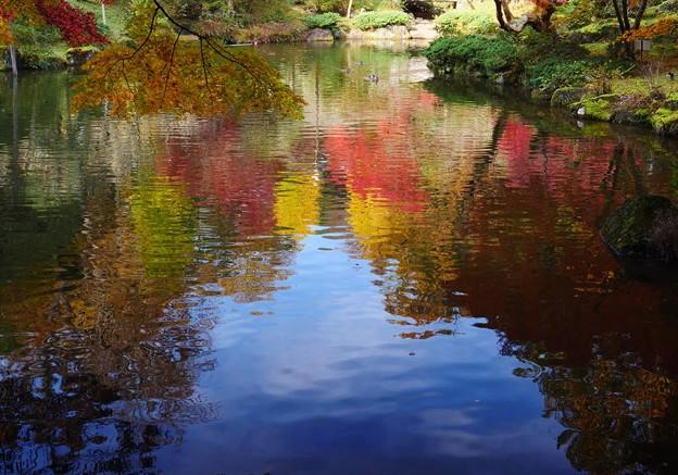 水面も秋色♪