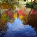 Photos: 水面も秋色♪
