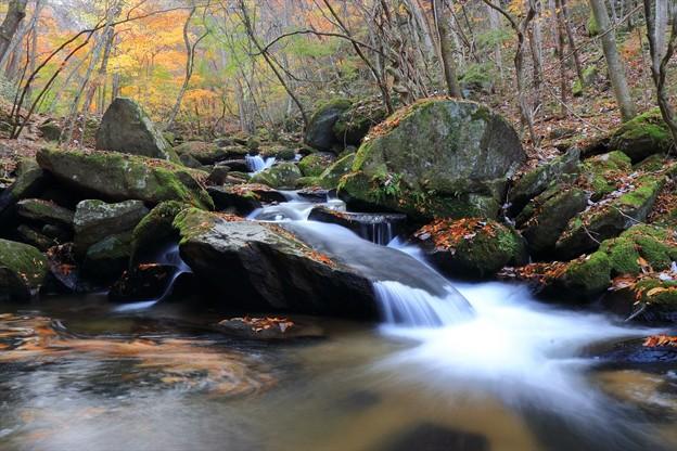 秋の渓谷美♪