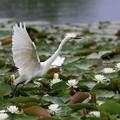 Photos: 花と鳥♪