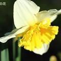 写真: 春の日差し