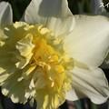 春の日差しの朝