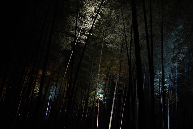 竹林の中にて