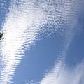 写真: 青深く 白鮮やかに 秋の昼
