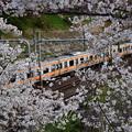 Photos: 賑やかに 電車に揺られて 春が来た