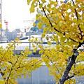秋の沿線8