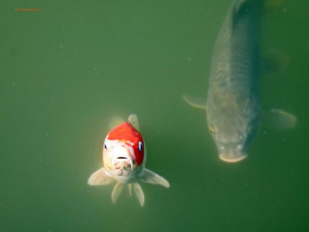 Photos: 立ち泳ぎ