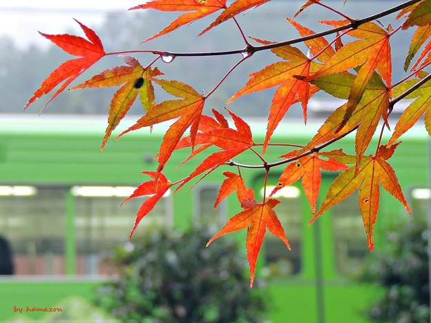 秋の沿線11
