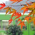 Photos: 秋の沿線11
