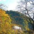 Photos: 秋の沿線13