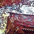 Photos: 紅葉2015(11)