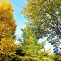 秋の沿線17
