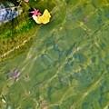 Photos: 水面に寄り添う