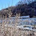 写真: 梅と小雪
