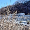 Photos: 梅と小雪