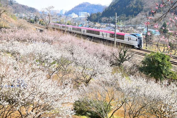 高尾梅郷(2)