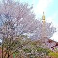 春の高幡不動尊