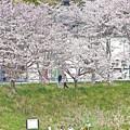 Photos: 春満喫日和