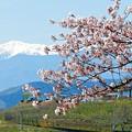 Photos: 春の甲州展望