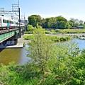 新緑の河川敷(2)