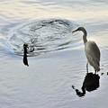 写真: 鵜鷺の仲
