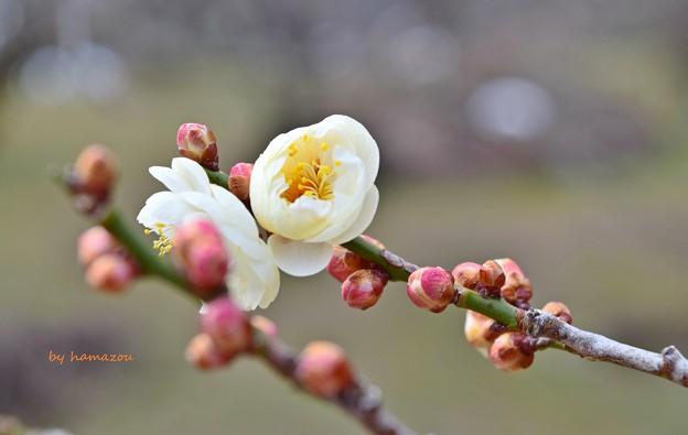 写真: breath of spring