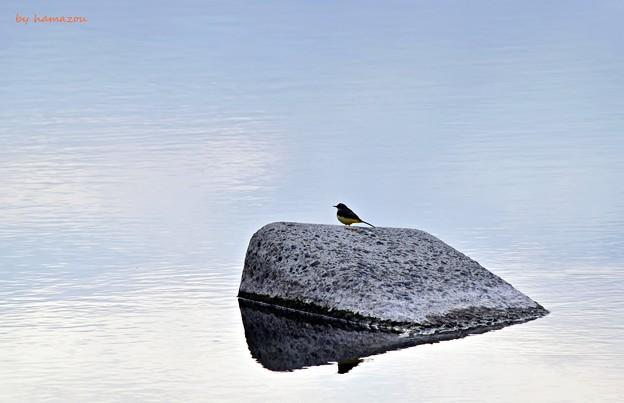 Photos: 背中の小鳥