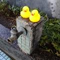 写真: Chick
