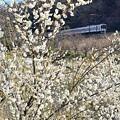 写真: 山麓の春