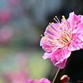 写真: in full bloom