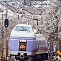 写真: 最後の春E351系