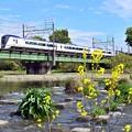 写真: 菜の花河川敷