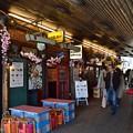 写真: ガード下の昭和桜